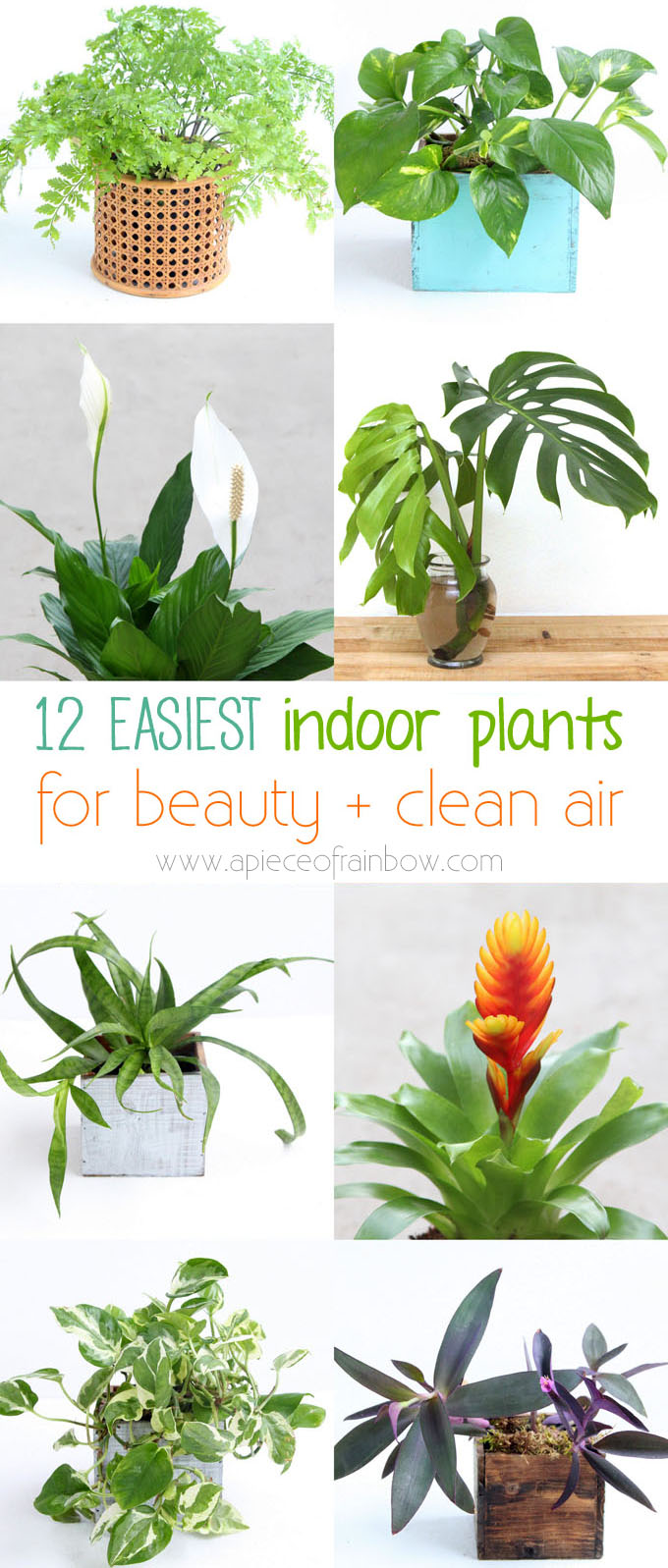Plants With Purpose 5 Types Of Greenery You Need In Your