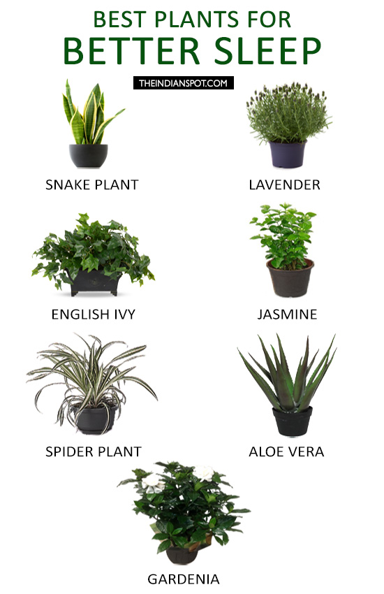 Best Plants to Help You Sleep - #MovewithGreens