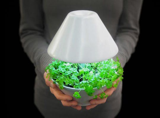 Plant that is also a light - #MoveWithGreens